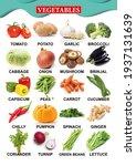 vegetable chart  for... | Shutterstock . vector #1937131639