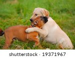 Stock photo playing puppy s 19371967