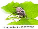 may beetle crawling on young... | Shutterstock . vector #193737533