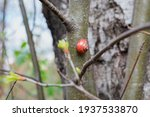 Snail On A Tree In Early Spring