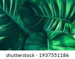 Green Leaf  Botanical Lush...