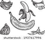 bananas  vector illustration.... | Shutterstock .eps vector #1937617996