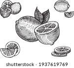 lemon  vector illustration.... | Shutterstock .eps vector #1937619769