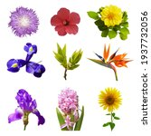 Macro Photo Of Flowers Set ...