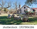 Small photo of Sheep and a covered wagon at Lyndon B. Johnson State Park and Historic Site and the Sauer-Beckmann Farmstead, living history farm that presents rural Texas life as it was around 1918.