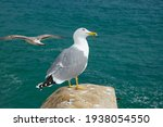Seagull Standing On A Rock...