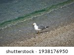 Seagull Standing On The Beach...