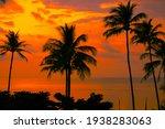 Palm Trees Beautiful Sunset On...