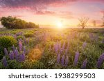 Sunrise On A Field Covered With ...