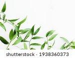 Green Leaves On White...