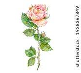 Pink Watercolor Rose Flower...