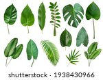 Set Of Tropical Leaves Isolated ...