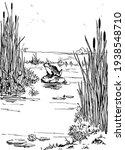 A Frog In A Swamp  Vintage Line ...