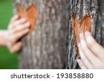 Two Heart Carved On A Tree And...