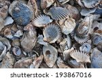 Pile Of Colorful Shells At...