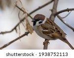 City Birds Titmouse  Sparrows...