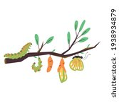 stages of growth from a... | Shutterstock .eps vector #1938934879