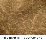 Close Up Dry Brown Leaf Texture ...