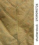 Dry Brown Leaf Texture   Teak...
