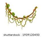 liana or jungle plant or vine...   Shutterstock . vector #1939120450