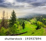 mountain summer landscape. pine trees near meadow and forest on hillside under  cloudy morning sky - stock photo