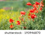 red poppies  natural background | Shutterstock . vector #193946870