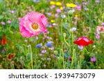 Beautiful Flowering Summer...