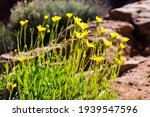 Wildflowers Blooming Along The...