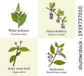 set of edible and medicinal... | Shutterstock .eps vector #1939737010