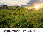Mountain Meadow At Sunset....