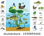 ecosystem of pond. diverse... | Shutterstock .eps vector #1939895440