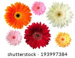 gerbers isolated on white... | Shutterstock . vector #193997384