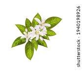 realistic orange flowering... | Shutterstock .eps vector #1940198926
