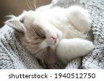 A Sleeping Small Kitten Lies In ...