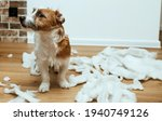 The Guilty Dog Destroyed The...