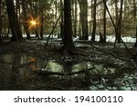 Sunset On The Swamp Forest In...