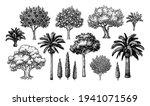Mediterranean Trees. Big...