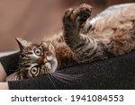 Beautiful Dark Cat Relaxing On...