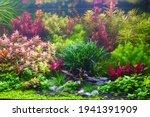 Colorful Aquatic Plants In...