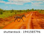 A Zebra Covered In Red Sand In...
