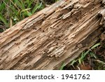 Termite Damaged Wood Laying In...