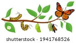 butterfly life cycle. cartoon... | Shutterstock .eps vector #1941768526