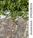 an old cement floor with water...   Shutterstock . vector #1942108216