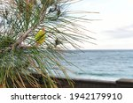 Sea  Fir And Fence Against The...