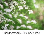 white flowers on the tree... | Shutterstock . vector #194227490