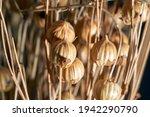 Dry Flax Plant Capsules  Close...