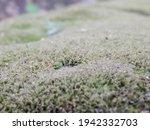 Blurry Background  Soft Focus ...