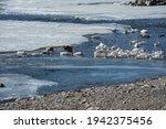 Ducks Swimming In Gradually...
