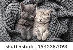 Couple Cute 2 Kittens In Love...