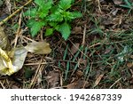 green plant in a forest with... | Shutterstock . vector #1942687339